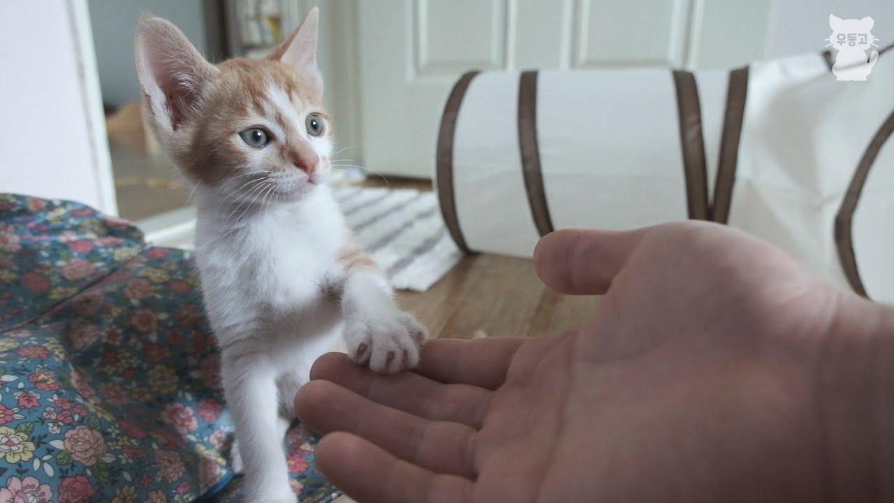 엄마에게 버려진 아기 고양이의 묘생 역전 / 집냥이와 길냥이 구분이 의미 없는 이유