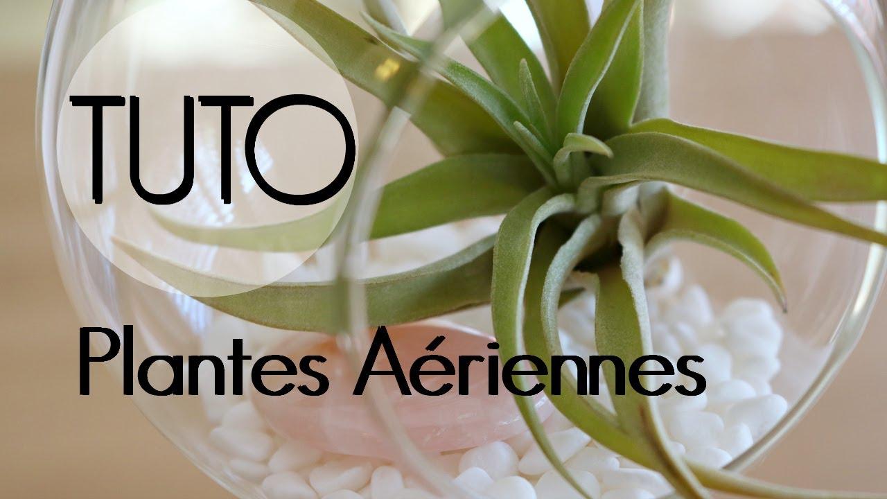 Les Filles De L Air Plante diy - plantes aériennes | décoration de tillandsia suspendue