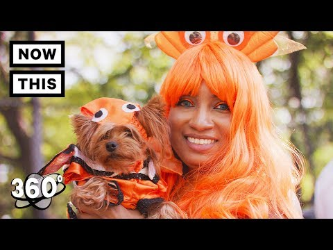 Halloween Dog Parade - Tompkins Square Park, NYC 2017 | Unframed by Gear 360 | NowThis