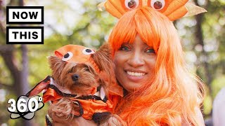 Halloween Dog Parade - Tompkins Square Park, NYC 2017 | Unframed by Gear 360 | NowThis thumbnail