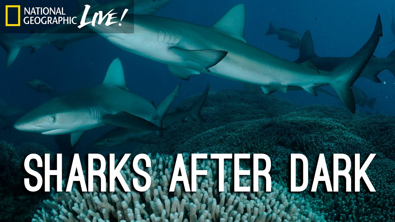 Photographing our Seas: Sharks After Dark | Nat Geo Live