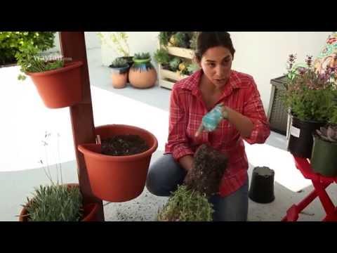 how-to-create-a-vertical-garden