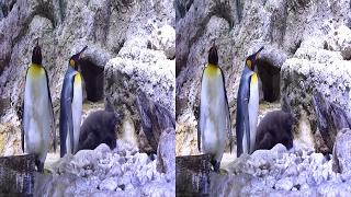 3D video - Munich Zoo in Winter - (3D SBS VR Box)