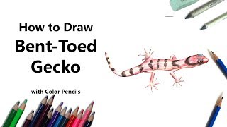 How to Draw a Bent-Toed Gecko with Color Pencils [Time Lapse]