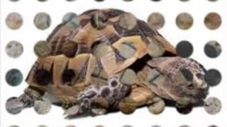 olympic želva