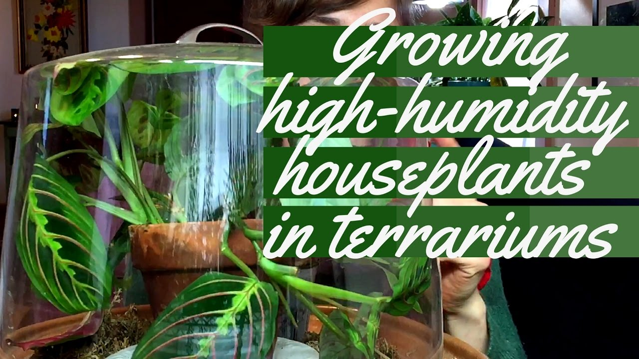 Growing Plants In Terrariums Youtube