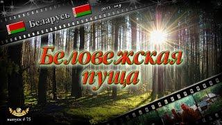 видео Беловежская пуща в Беларуси