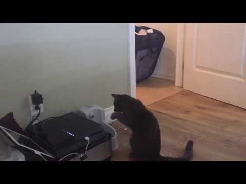 Got my cat a drinking fountain… filmed his first encounter