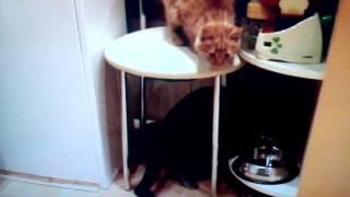 Маня ( моя кошка ) ей кажется нечем заняться :-)