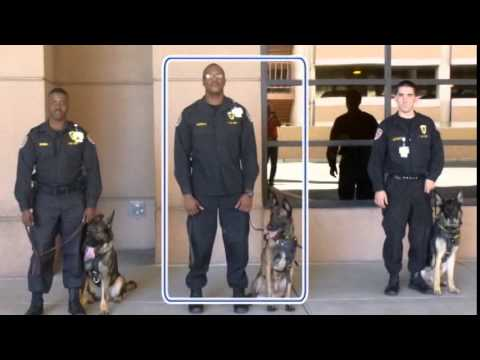 G4S K9 Services  YouTube