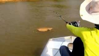 Baixar Pescaria Rio Araguaia - Luiz Alves - GO - arraia gigante - força de pirarara - outubro 2015