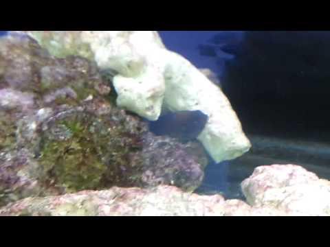 Fish Aquarium - Qatar