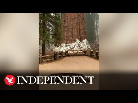 General Sherman, the world's largest tree, is wrapped in fire ...