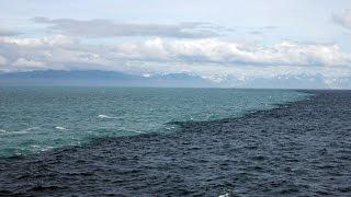 видео Моря тихого океана