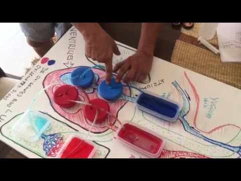 Heart function science project fourth grade - YouTube