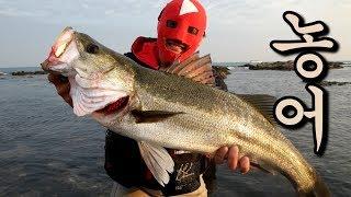 [우마]가을 돼지 농어를 낚아서 먹어보자!! Sea bass MUKBANG.