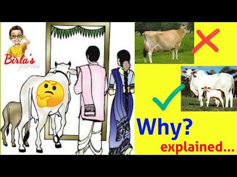 கிரஹபிரவேசத்துக்கு-jersey-மாட்டை-வீட்டிற்குள்-அழைத்து-செல்லாதீர்கள்-|-why-?