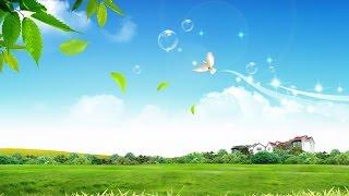 Học tiếng Nga qua bài hát - Loài chim hạnh phúc - Птица счастья