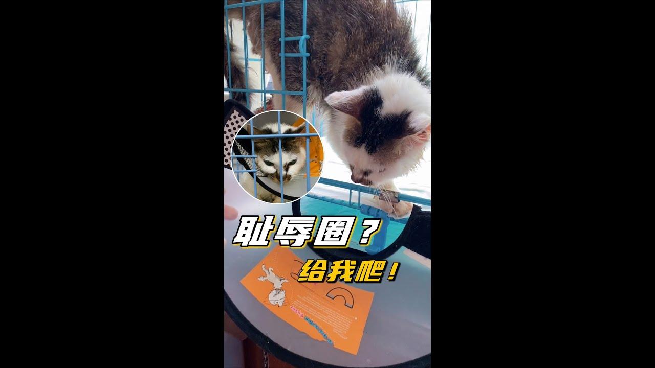 貓咪拒絕籠養委屈喵喵叫:老吳快來,有人虐貓!  李喜貓