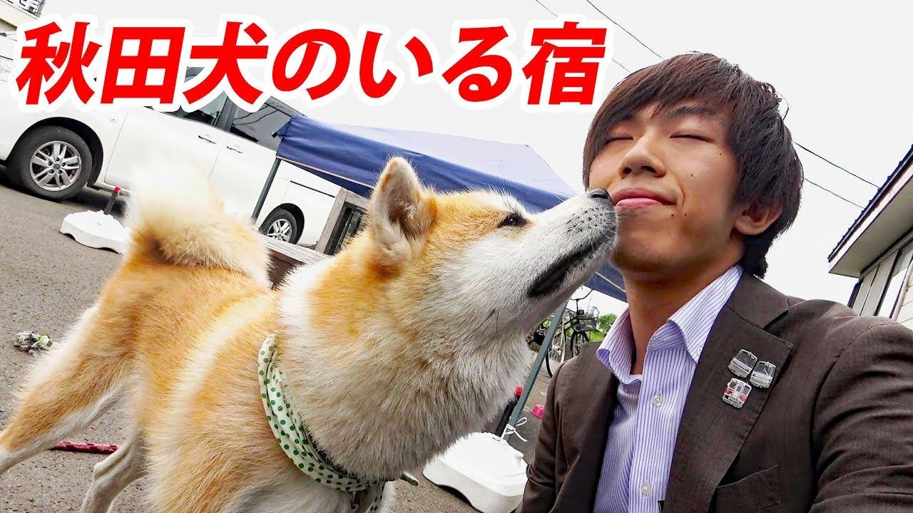 ツーリズム 秋田 犬