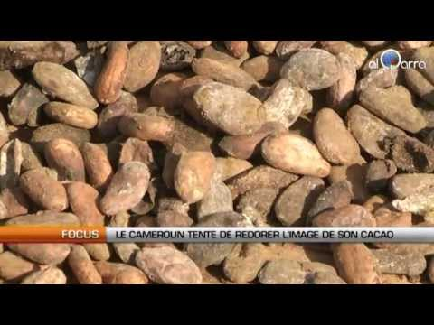 Le Cameroun tente de redorer l'image de son cacao