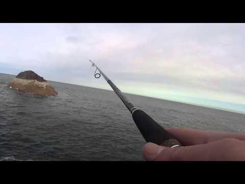 St Abbs rock fishing for tricksy fish.