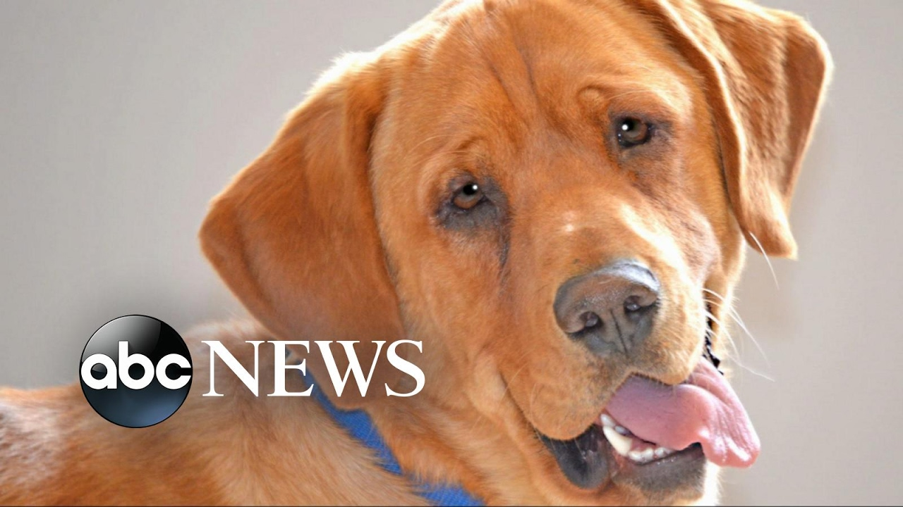 Animal Shelter Finds Homes For Every Dog And Cat Abc News