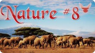 Nature #8  Животный мир  Животные  Природа  Красивое видео  Animal videos