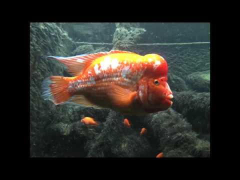 A Look at What's at the Shedd Aquarium in Chicago