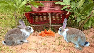 Amazing Deep Hole Quick Rabbit Trap Using Big Basket - How To Catch Rabbit With Live Rabbit Trap