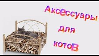 Аксессуары для котов, кошек