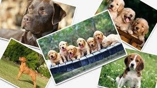 Top 10 Best Pet Dogs For Kids 2014