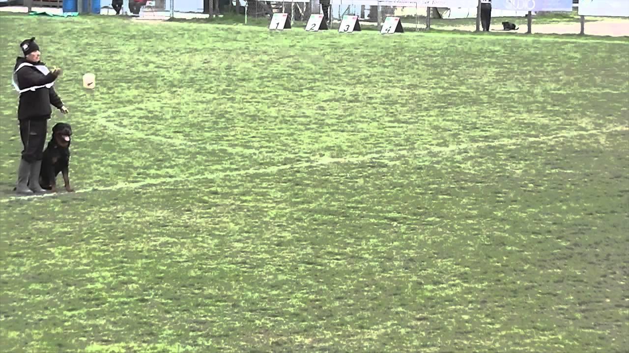 Campionato Addestramento Rottweiler Youtube