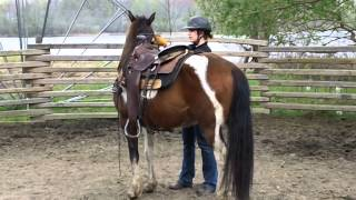 Sold!  Ranger - 2005 Pinto Pony Gelding For Sale!  13.3hh