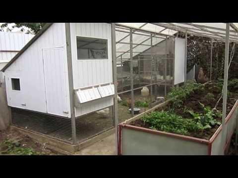 видео: Офис-курятник . Более подробно вот здесь - http://www.perepel.com/forum/viewtopic.php?f=78&t=4010