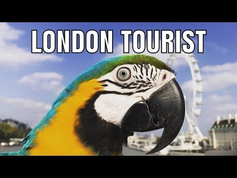 Mikey The Macaw || London Tourist (Official Music Video)