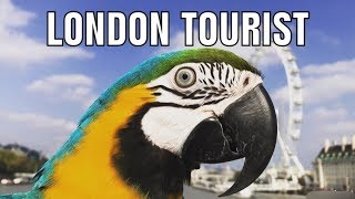 Mikey The Macaw    London Tourist (Official Music Video)