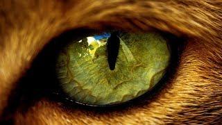 Почему нельзя смотреть кошке в глаза? Интересные факты про кошек. Суеверия и мистика о кошках
