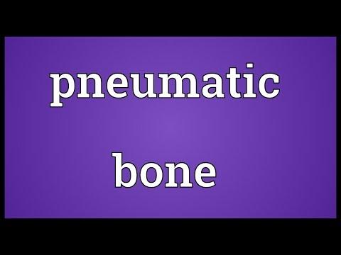 Pneumatic bone Meaning