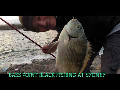 2d Bass Point VLOG Video Black Fishing At WOLLONGONG