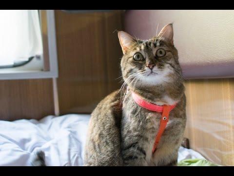 Как перевезти кошку в поезде /2015, лето/