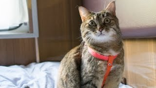 Как перевезти кошку в поезде /2015, лето/(, 2015-06-14T20:28:35.000Z)