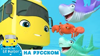 Бастер Малыш Акула НОВИНКА Мультики для детей Автобус Бастер Детские Песни