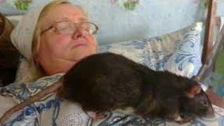 TOP10 RATAS + Grandes del Mundo-10 -Biggest rats in the world