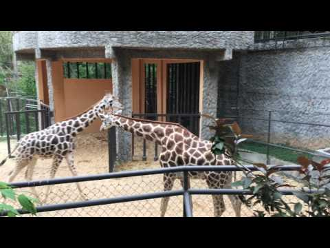 Emperor Valley Zoo Trinidad in 4K