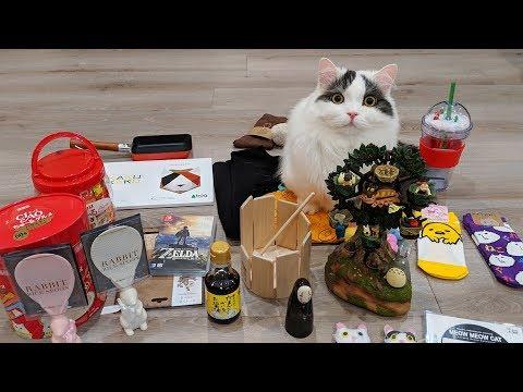 두달만에 엄마 만난 고양이! 여행에서 사온 선물 개봉!
