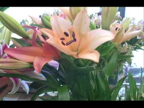 PAULS FLOWERS 30 SEC SPOT