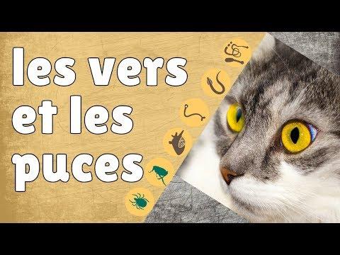 Broadline Traitement Contre Les Vers Et Les Puces Chez Les Chats