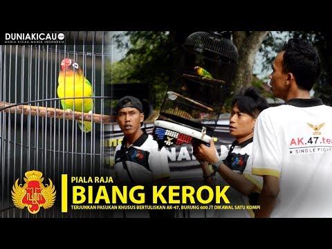PIALA RAJA - BIANG KEROK Terjunkan Pasukan Khusus AK-47, Burung 600 Jt Dikawal Satu Kompi