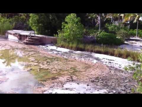 The Royal Oasis Resort/Casino Freeport Grand Bahama